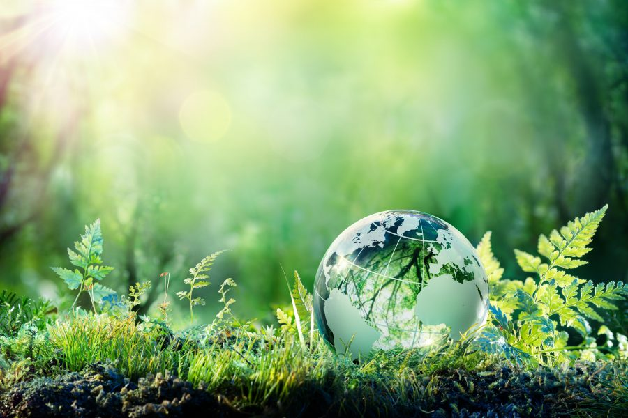 Mimizing Carbon Footprint Globe in Forest